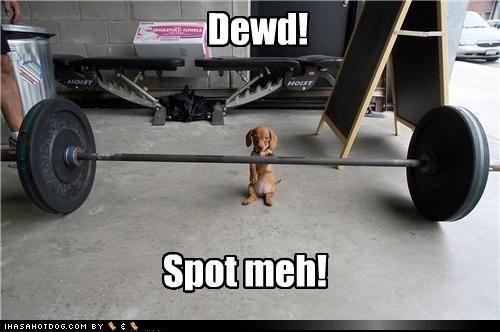 weight liftin' weiner