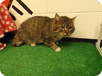 Rome, GA - Domestic Shorthair. Meet 14C-0188 (4/1) a Cat for Adoption.