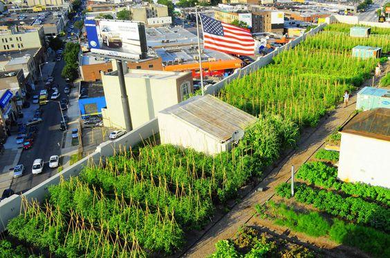 Brooklyn Grange | urban rooftop farm in Brooklyn, NY