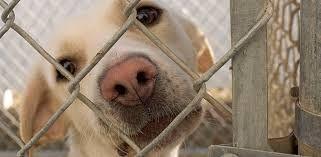 Resultado de imagem para adote um cão