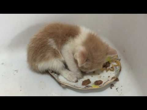 Do You Have Young Kittens Newly Weaned From The Momma Cat Here S How To Make Sure They Get Enough Nutrition To Get Sick Kitten Feeding Kittens Cute Kitten Gif