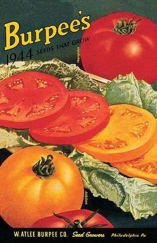 YUMMY yellow tomatoes!! burpee seeds 1944: