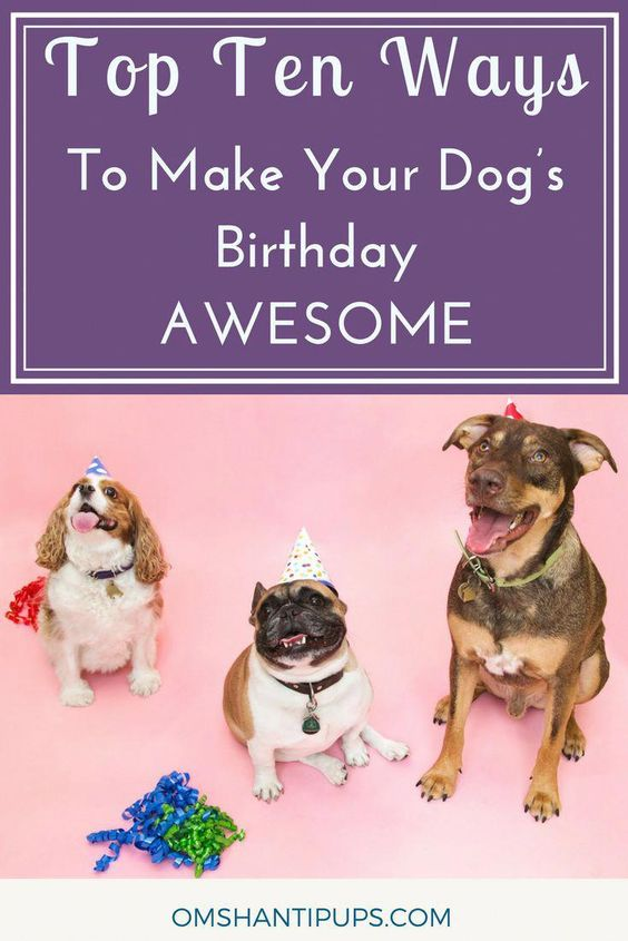 Helping Your Pet To Become Obedient And Well Trained Is Straightforward With One Of These Dog Training Tips And Tricks 566448475 Dog Birthday Your Dog Dog Care
