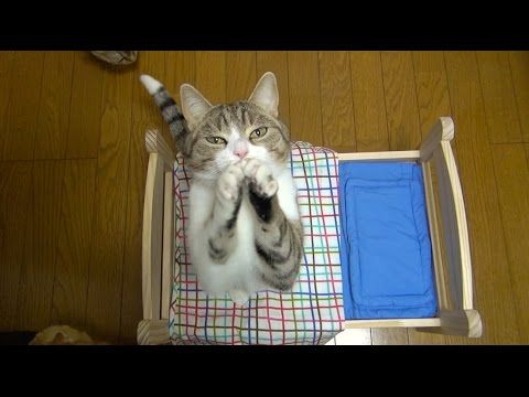 """She Got Them A Cat-Sized Bed, But Just Watch Their Reaction…You'll Say """"AWW"""" When You See THIS!   The Meow Post"""
