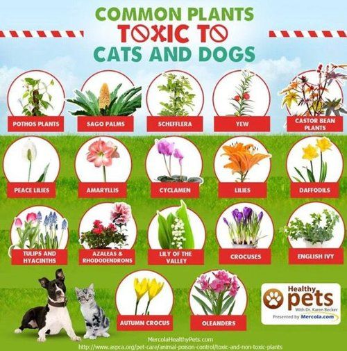 Fifteen Plants That Are Toxic To Your Pets Toxic Plants For Cats