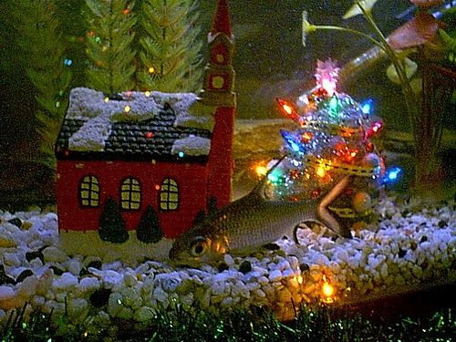 Fish tanks decoration and search on pinterest - Fish tank christmas decorations ...