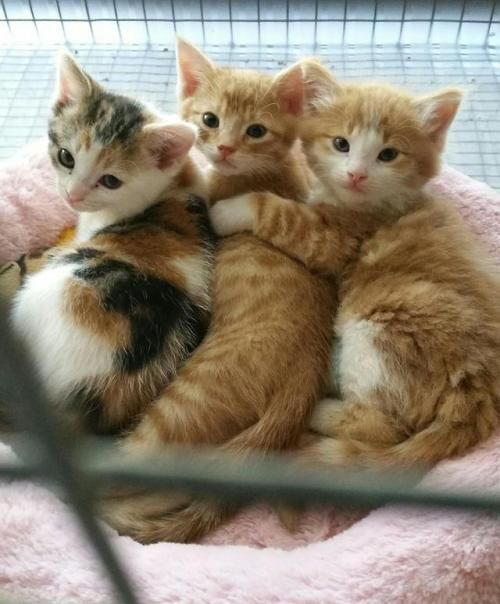 Pin By Darci On Animals Kittens Cutest Cute Animals Cute Cats