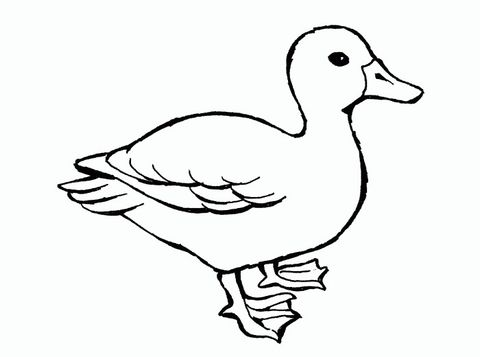Animal Templates Free Premium Templates Animal Coloring Pages Bird Coloring Pages Animal Templates