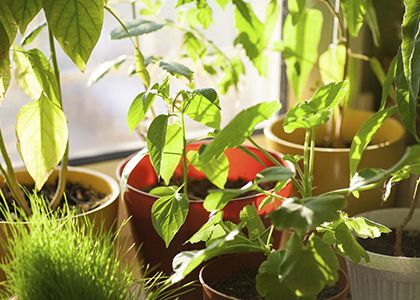 House Plants that Cleanse Your Home