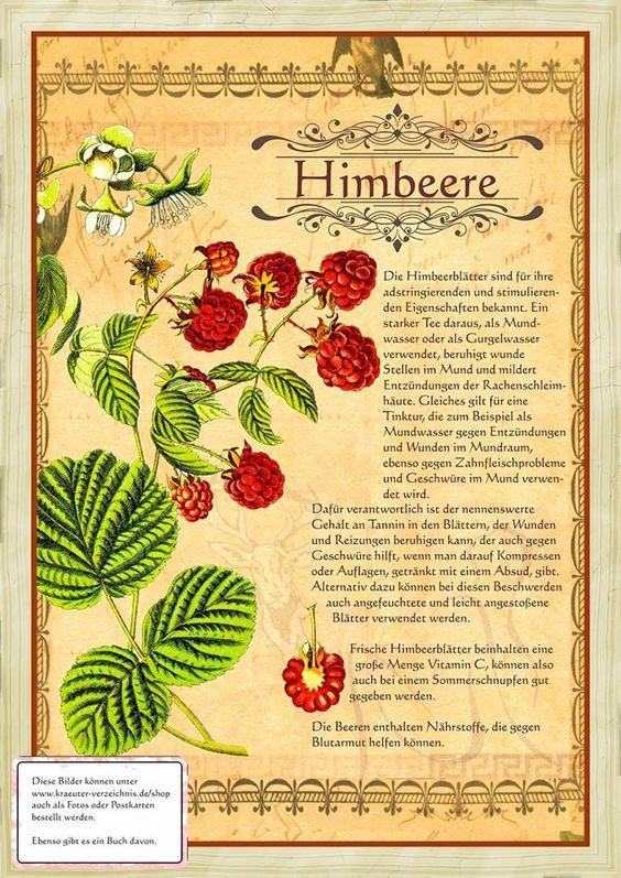 Himbeere http://www.kraeuter-verzeichnis.de/