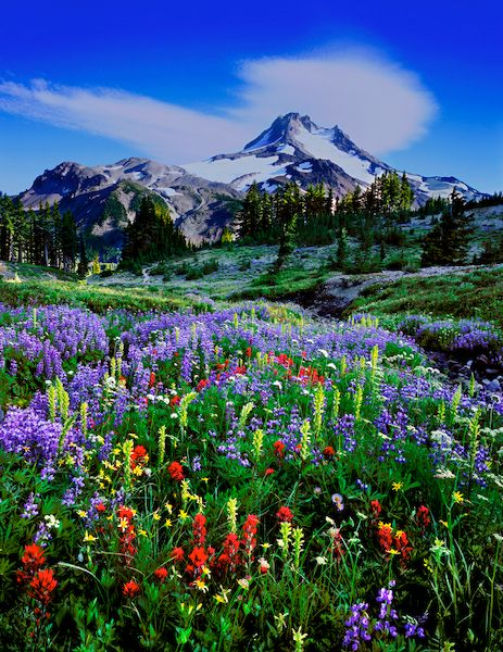 Oregon's Mt. Jefferson Wilderness area.