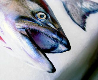 st augustine florida fishing