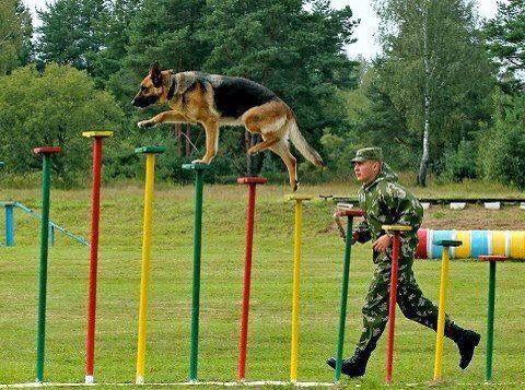 Dog Agility and Confidence Training