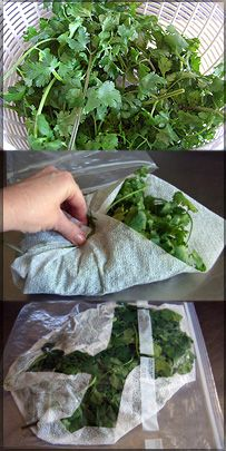 LOVE Cilantro!  This method will keep it fresh.