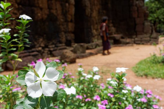 Day 8, Exchange,  Flowers, Ta Prohm, Tonle Bati Temple, Cambodia