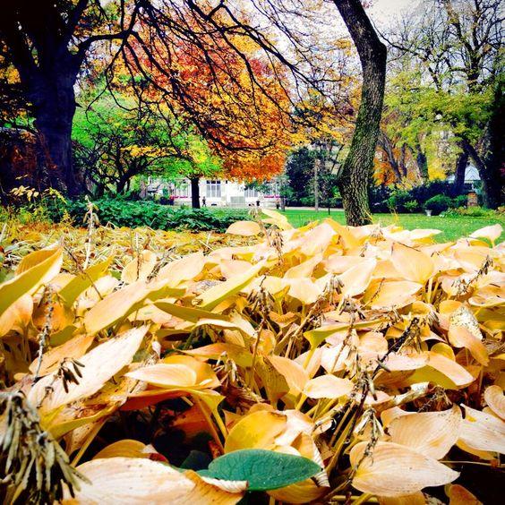 Les feuilles mortes se ramassent à la pelle…. The Jardin du Luxembourg in Paris offers its last treasures before the long winter sleep http://www.youtube.com/watch?v=Gnp58oepHUQ&sns=em