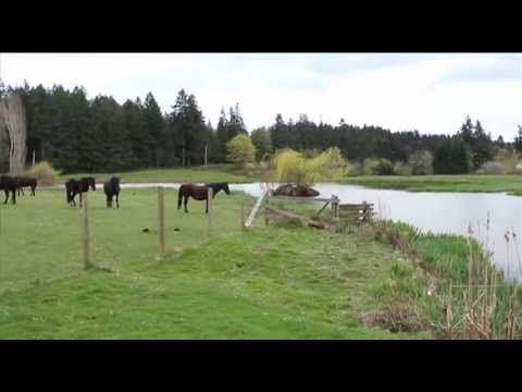 a great history of a great horse...Canadian Horse - Shaw TV Nanaimo