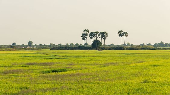 Cánh đồng bên hồ Tonle Sap