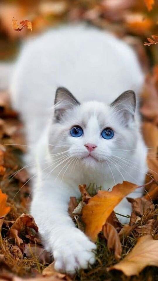 White Cat In Autumn Leaves Cute Cats Pretty Cats Cute Cats