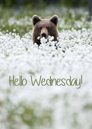 Happy Wednesday! ❤️: