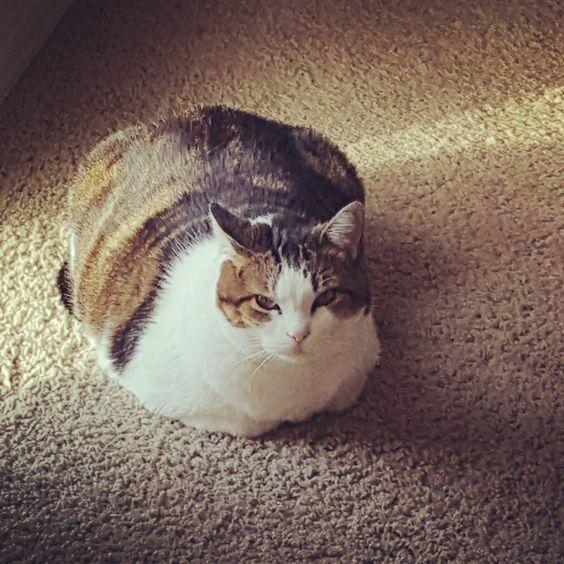 A larger loaf.