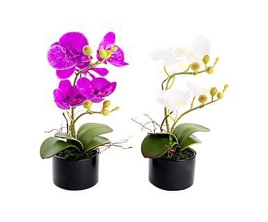 Set di 2 piante artificiali Orchidea con vaso nero, h 26 cm