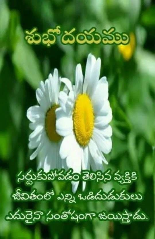 Pin By Parvathi Parvathi On Life Herbs Plants Best Quotes