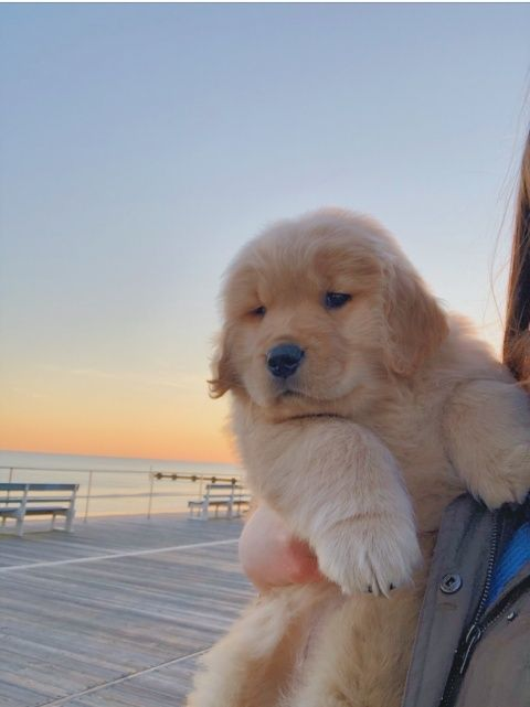 Rachelpropper Relatablemoods In 2020 Cute Dogs And Puppies Cute Baby Animals Cute Funny Animals