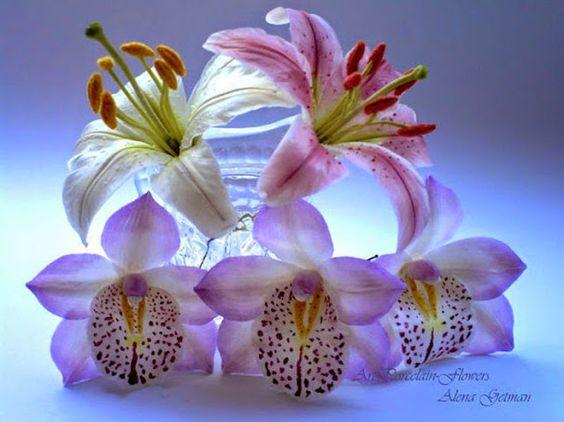 GIF New World - Flower GIF - Community - Google+: