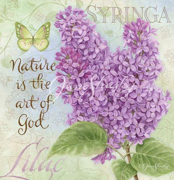 Jane.Shasky.Botany.19.of.23.Syringa: