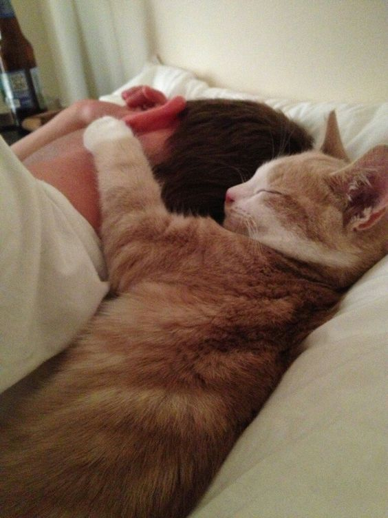 21 reasons we can't help but love our cats — even when they're jerks - Page 3 of 3