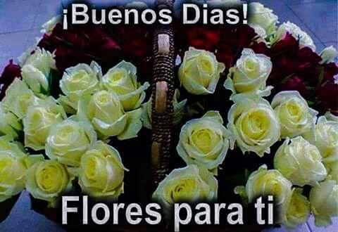 B.dias. flores para ti