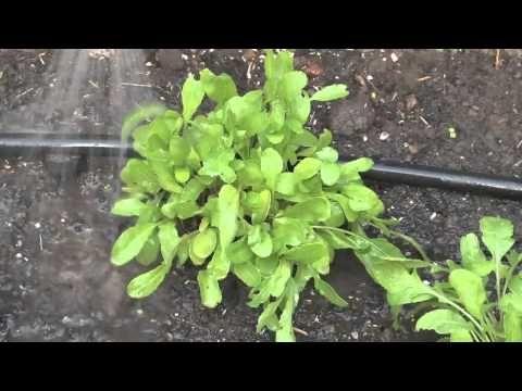 Pinterest the world s catalog of ideas for Harvest organic soil