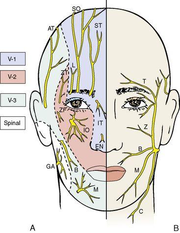 trigeminal nerve v1 v2 v3 V2: foramen rotundum v3: foramen ovale cranial nerve v function: v1 - ophthalmic (sensory) v trigeminal vi abducens vii facial.