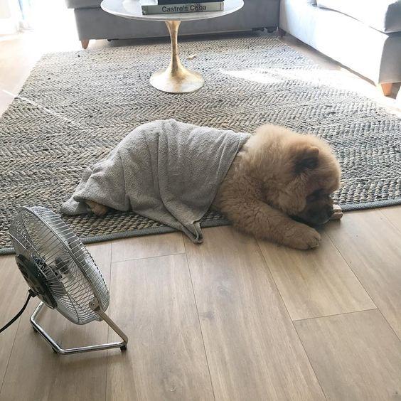 wet towel and fan