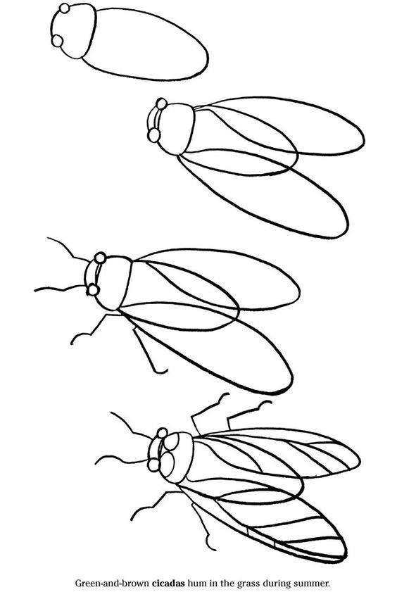 how to draw a cicada