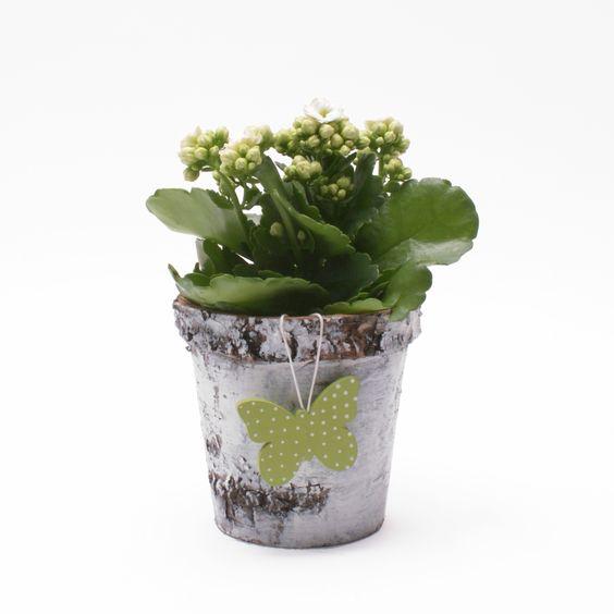 Maceta de corteza para plantas macetero para centro de - Macetas para centros de mesa ...