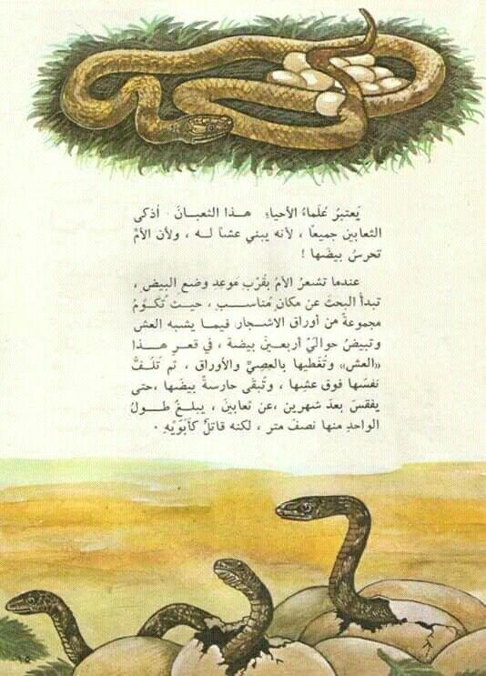 Pin By القراء On إصدارات دار ثقافة الأطفال العراقية