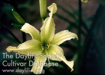 spin master daylily - Google Search