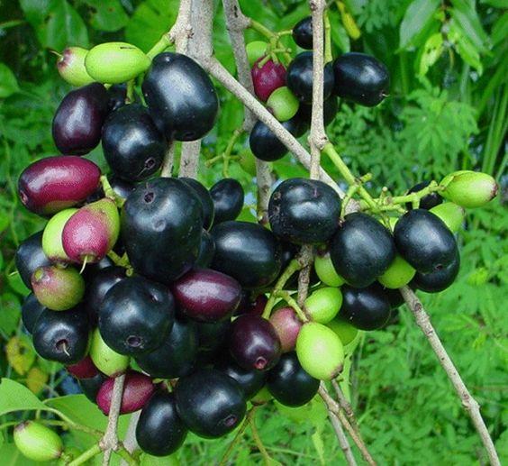 Kandungan Gizi Dan Manfaat Buah Rambutan