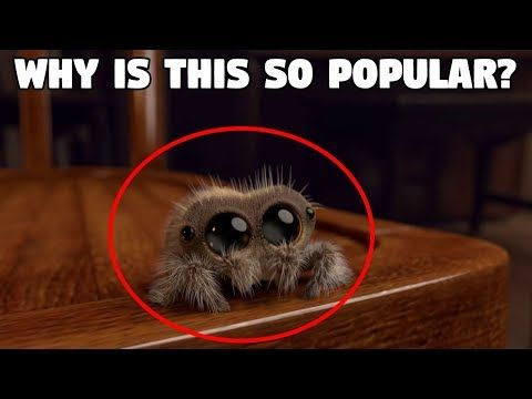 Lucas The Spider Captured Youtube Lucas The Spider Spider