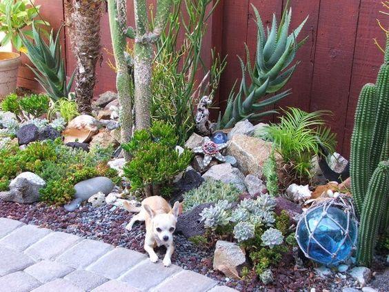 ideias jardins grandes:Jardins suculentas – grandes idéias para apartamentos, varandas