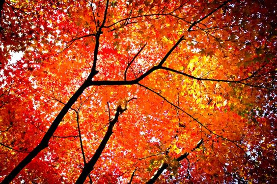 Really want to paint this and hang it in my living room for fall!