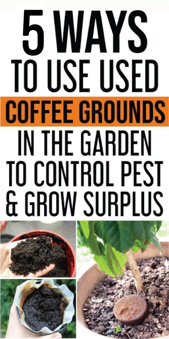 4c5d698c7271a5bb03f70900b81c9200 - Coffee Grounds Good For Vegetable Gardens