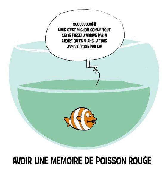 Memoire de poisson rouge humour et petits panneaux for Achat d un poisson rouge