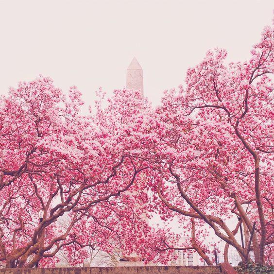 NY Through the Lens - New York City Photography : Photo