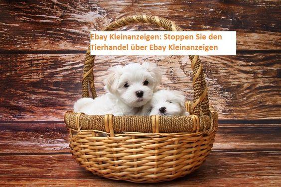 Petition Ebay Ka Bmu Bmel Juliakloeckner Svenjaschulze68 Jensspahn Abaerbock C Lindner Cducsubt Spdbt Die Gruene In 2020 Erwarten Baby Neuer Welpe Ebay