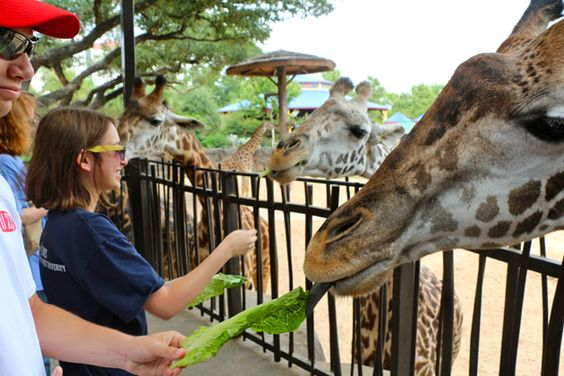 An Interns' Insight: The Buzz Explores the Houston Zoo