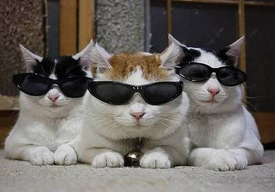 Blues Brothers...