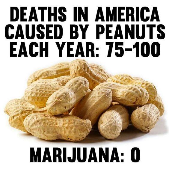 Ban peanuts,  legalize marijuana